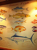 Mural and description of Popular fish, Barnet